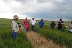2010 Wheat Field Days (June)