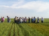wheat-field-days-2010-041