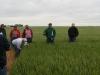 wheat-field-days-2010-071