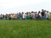 wheat-field-days-2010-076