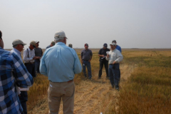 2011 Wheat Field Days