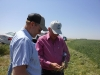 Jerry Johnson and Tim Stahlecker examine wheat for disease.