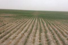 2014 Wheat Quality Tour