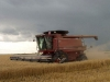 Harvest 2010 (10)