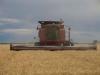 Harvest 2010 (14)