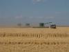 Harvest 2010 (3)