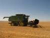 Harvest 2010 (5)