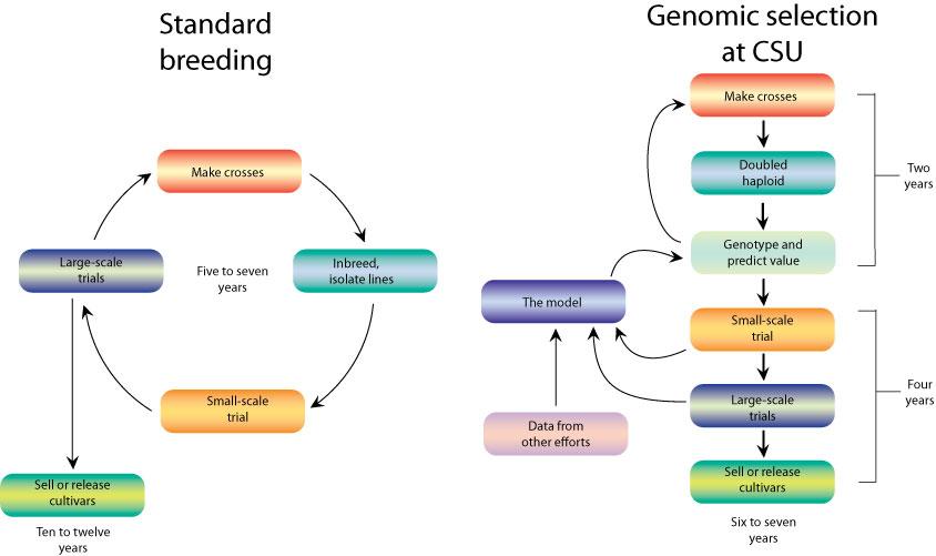 Nature Genetics Review Gwas