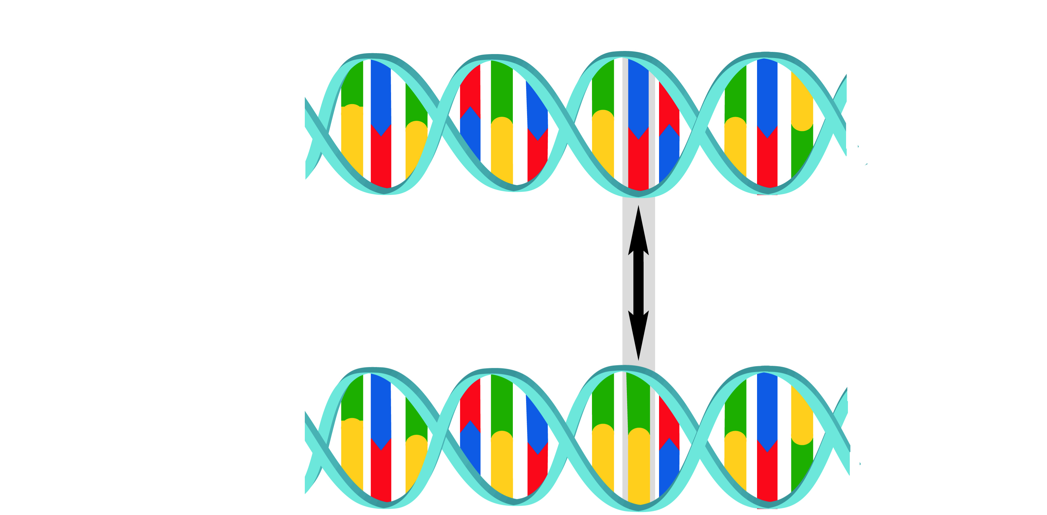 What is a DNA Mutation?   DNA Services UNLIMITED